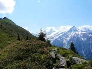 L'Aiguillette des Houches, Haute-Savoie (juillet 2013)