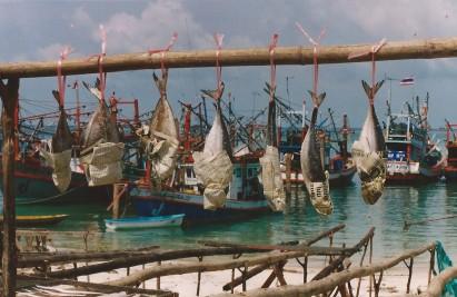 Pêche à Koh Pha N'Gan, Thaïlande