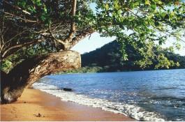 Nosy Mangabe, Cap Masoala (Madagascar 2006)