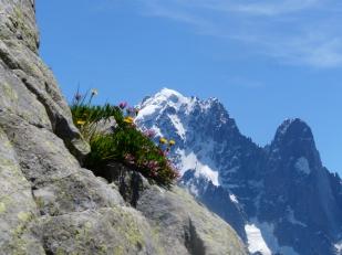 Vue sur les hauteurs de Chamonix (juillet 2014)
